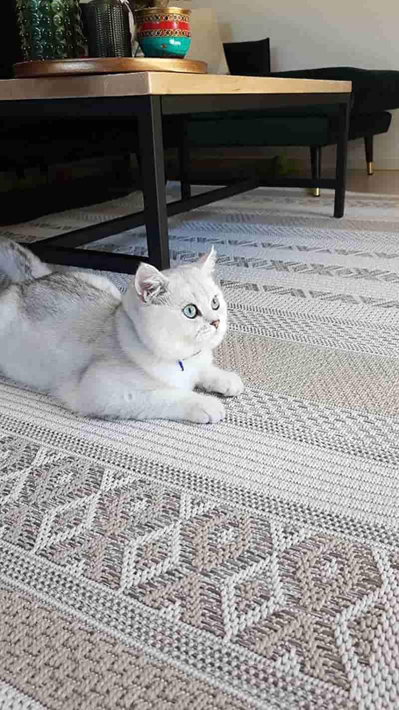 Outdoor Teppich von the carpet mit Katze